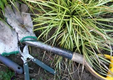 sådan rengøres haveredskaber
