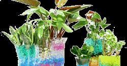 vandperler til blomster