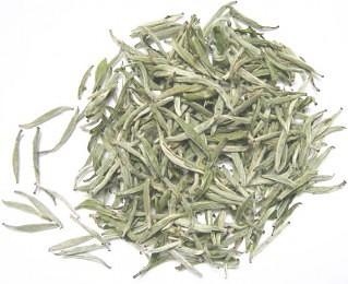 hvid te til immunforsvar
