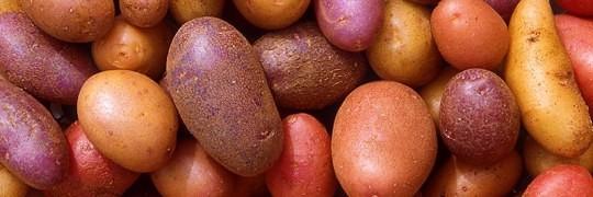 kartofler styrker dit immunforsvar
